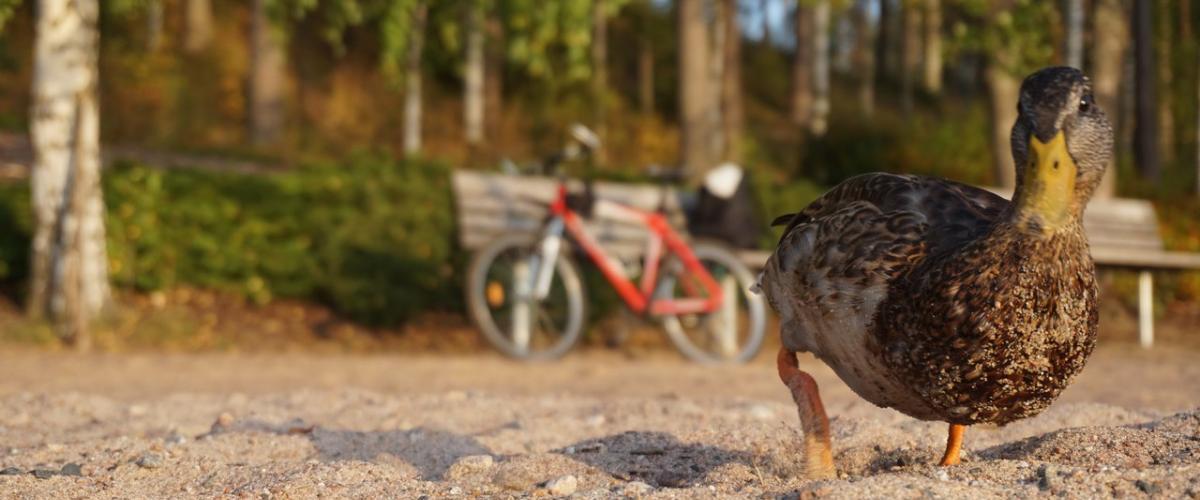 На Велосипедах в Финляндию